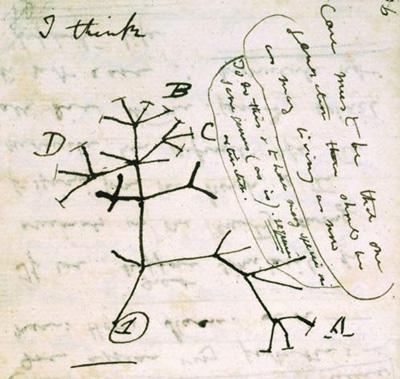 darwins_notebook